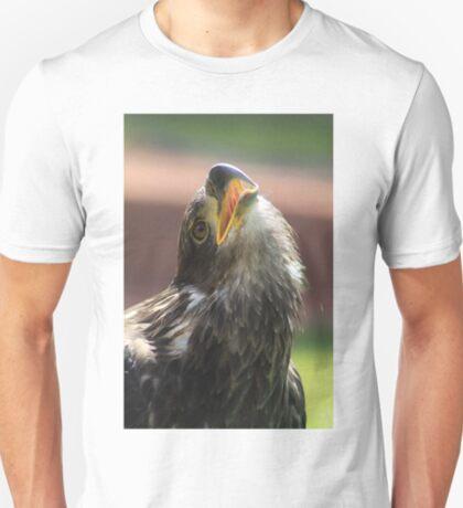 Juvenile Bald Eagle T-Shirt
