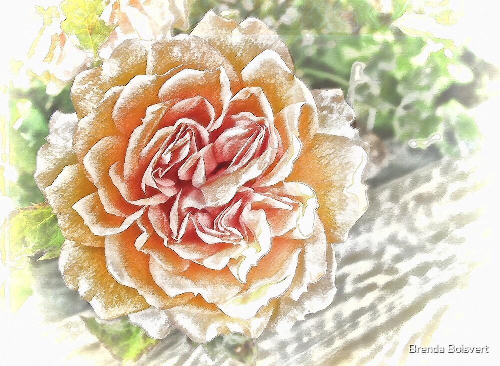 Frosted Rose by Brenda Boisvert