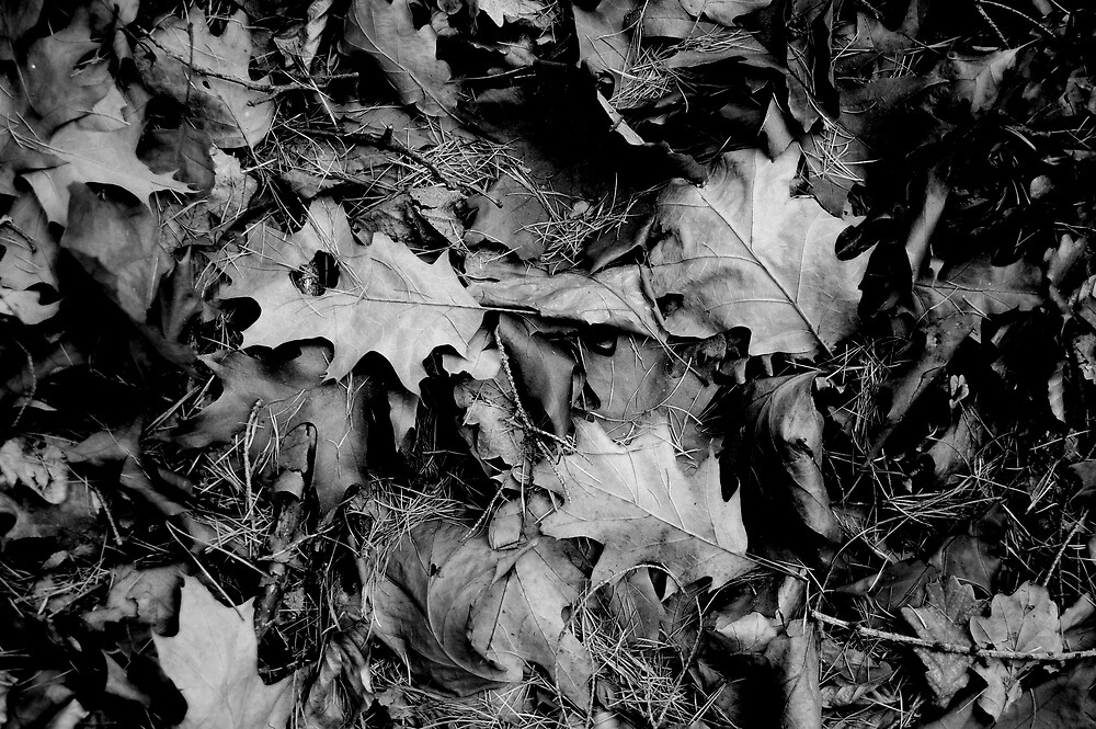 Autumn Leaves by Janette Zlamal