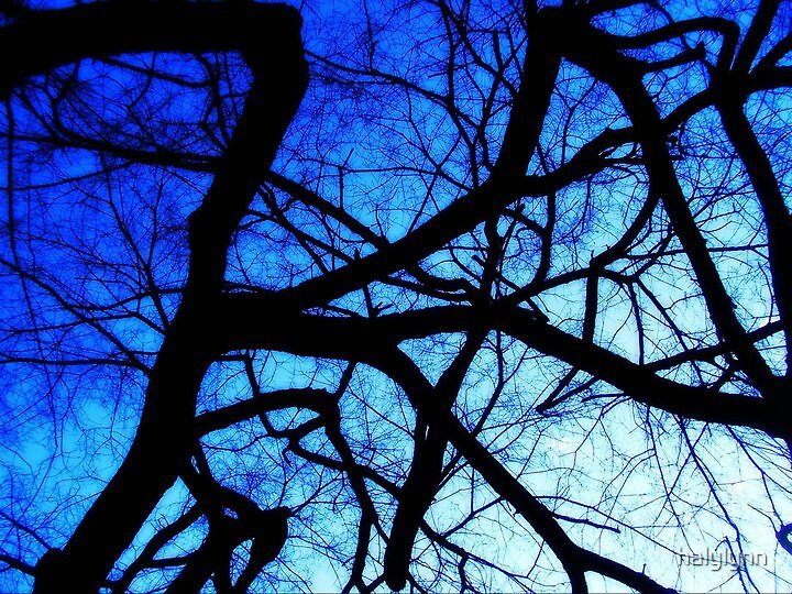 tangled in the blue by halylynn