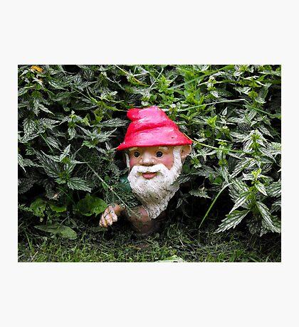Hiding Gnome Photographic Print