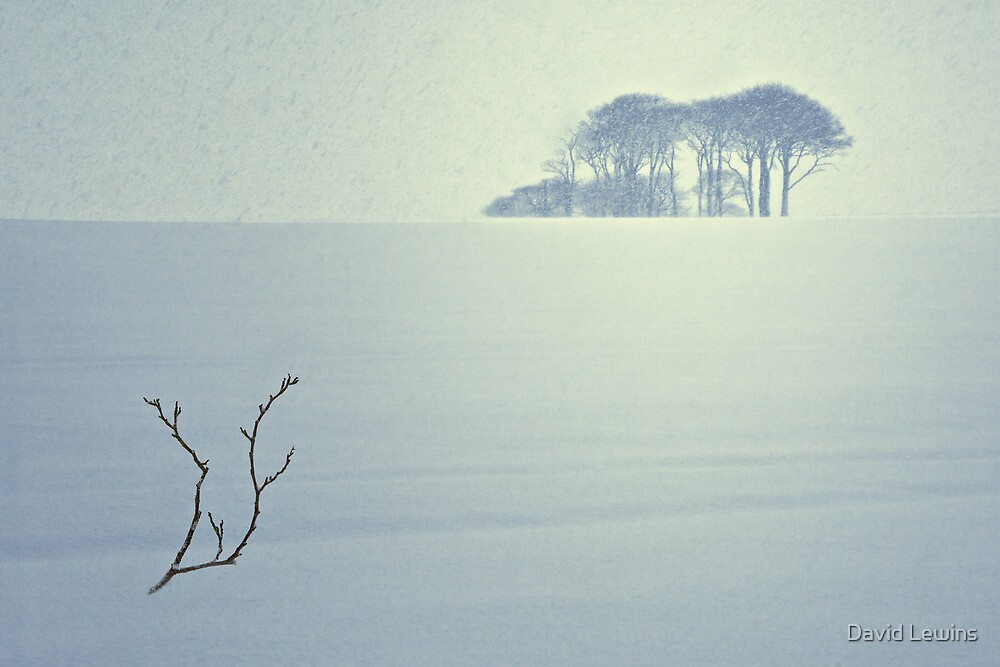 The Snow Storm - Winter Copse, County Durham. by David Lewins