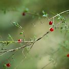 Red Berries by Meaghan Roberts
