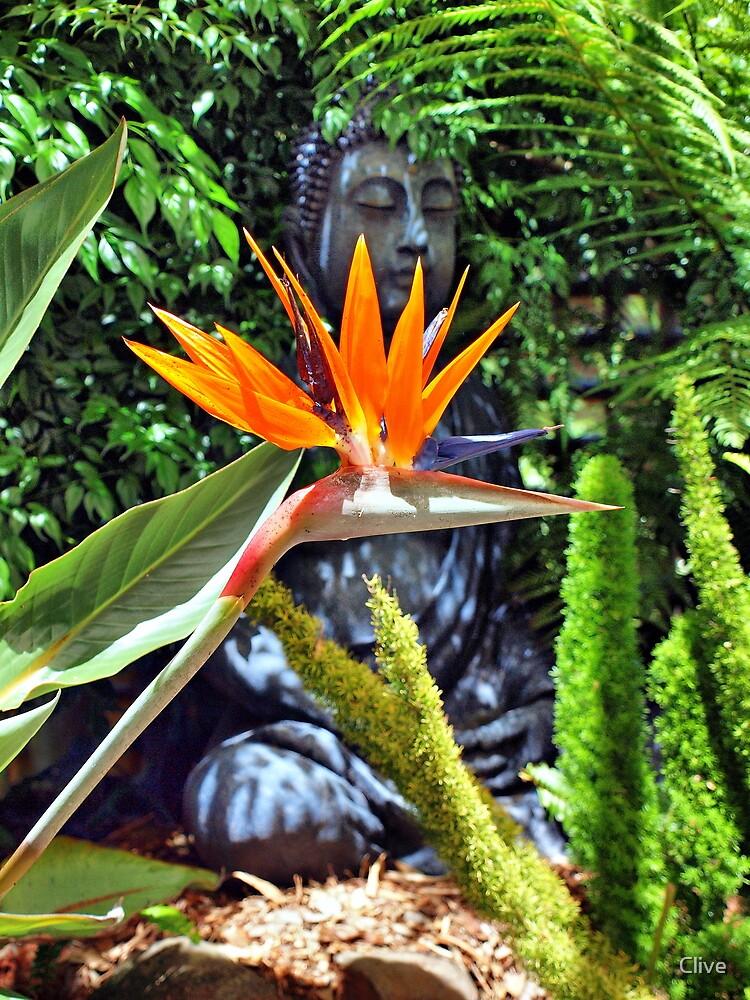 Bird of Paradise - Strelitzia reginae  by Clive