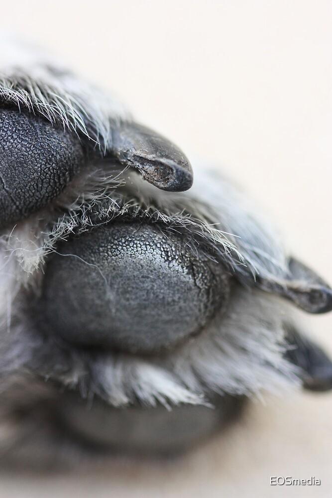 Puppy Paw by EOSmedia