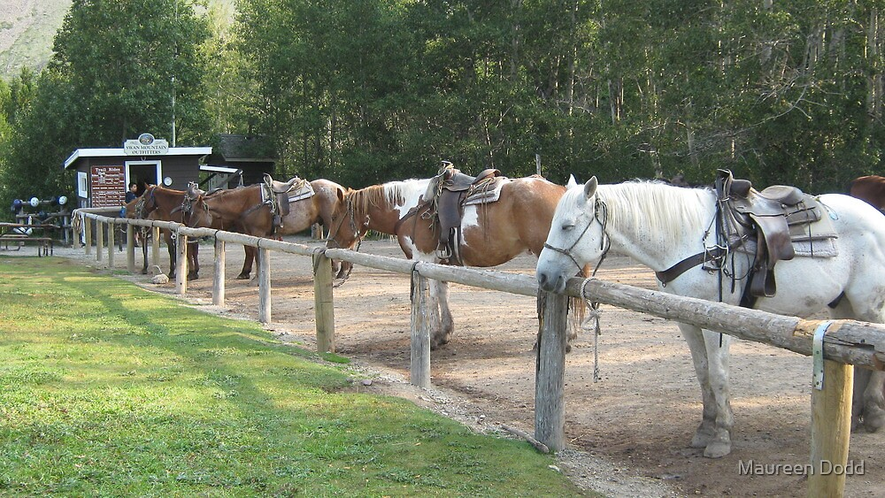 Waiting for a Rider. by Maureen Dodd