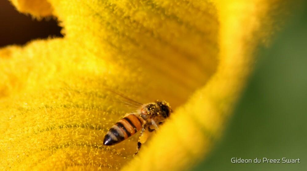 Busy Bee by Gideon du Preez Swart