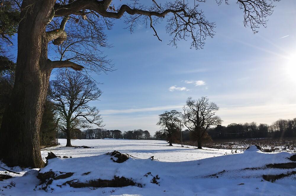 Winter in Bellurgan Park by Mairead1