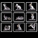 Miniature Schnauzer yoga Asana Meditation Funny von mjacobp