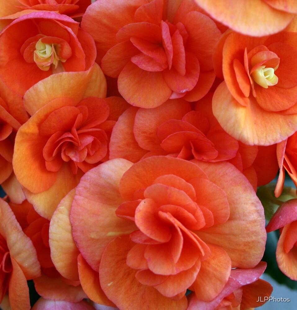Orange Blossoms by JLPPhotos