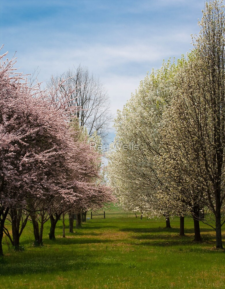 Spring Lane by Ray Wells