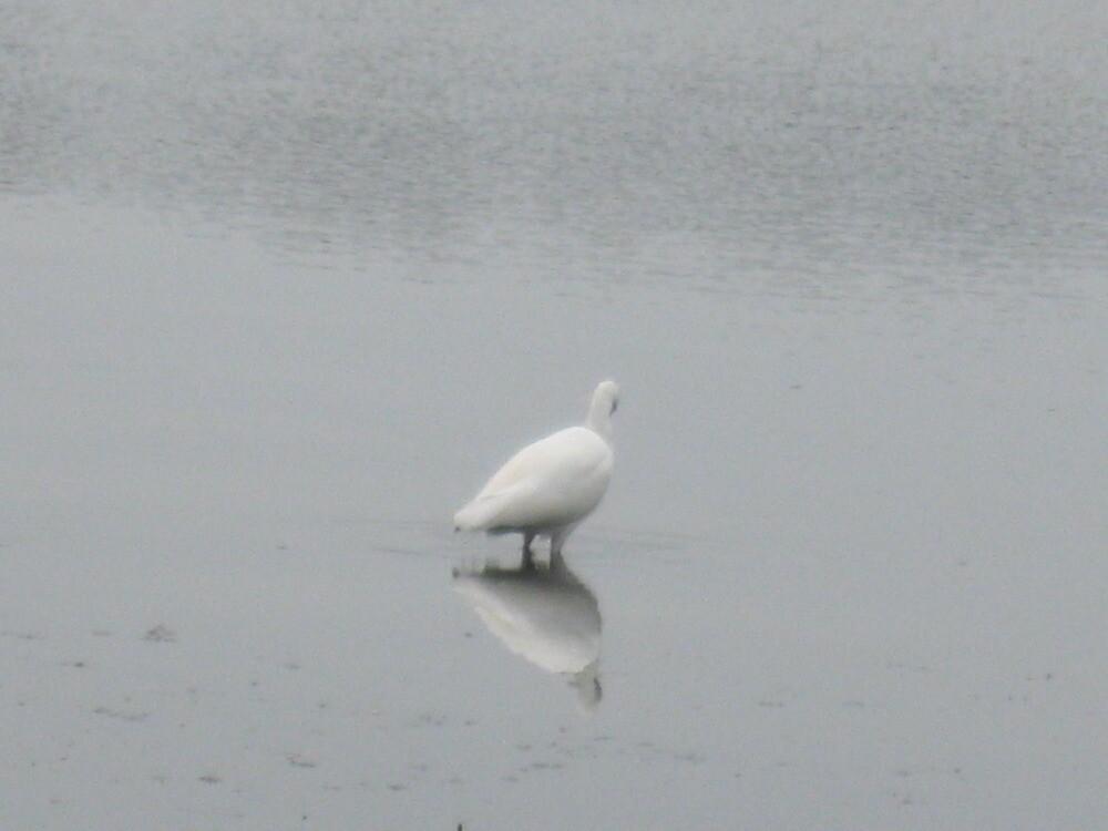 white waterbird by kevin seraphin