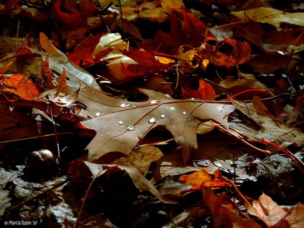 Natures Tears  by Marcia Rubin