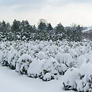 Snow...snow... by Ana Belaj