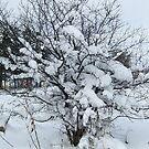 For those who love snow days by Ana Belaj