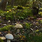 Fungi Forest by finnarct