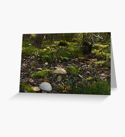 Fungi Forest Greeting Card