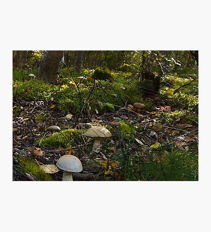 Fungi Forest Photographic Print