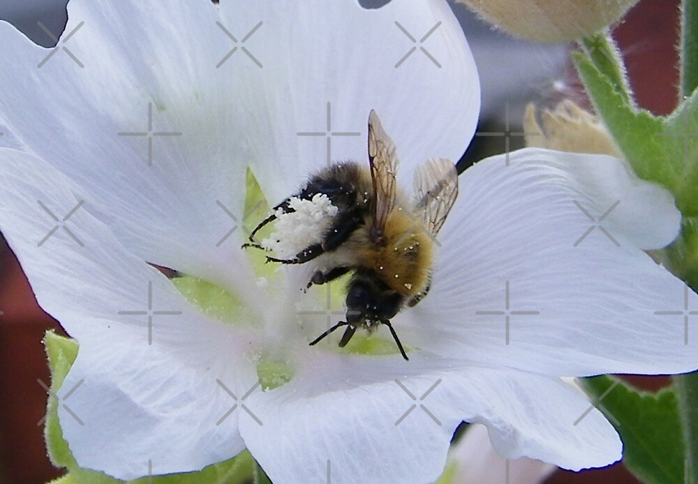 Busy Bee 3 by LoneAngel