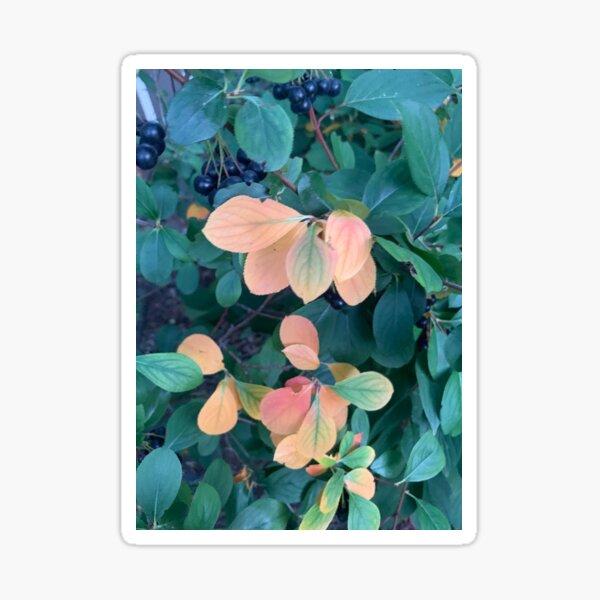 Orange Leaves Black Berries Sticker