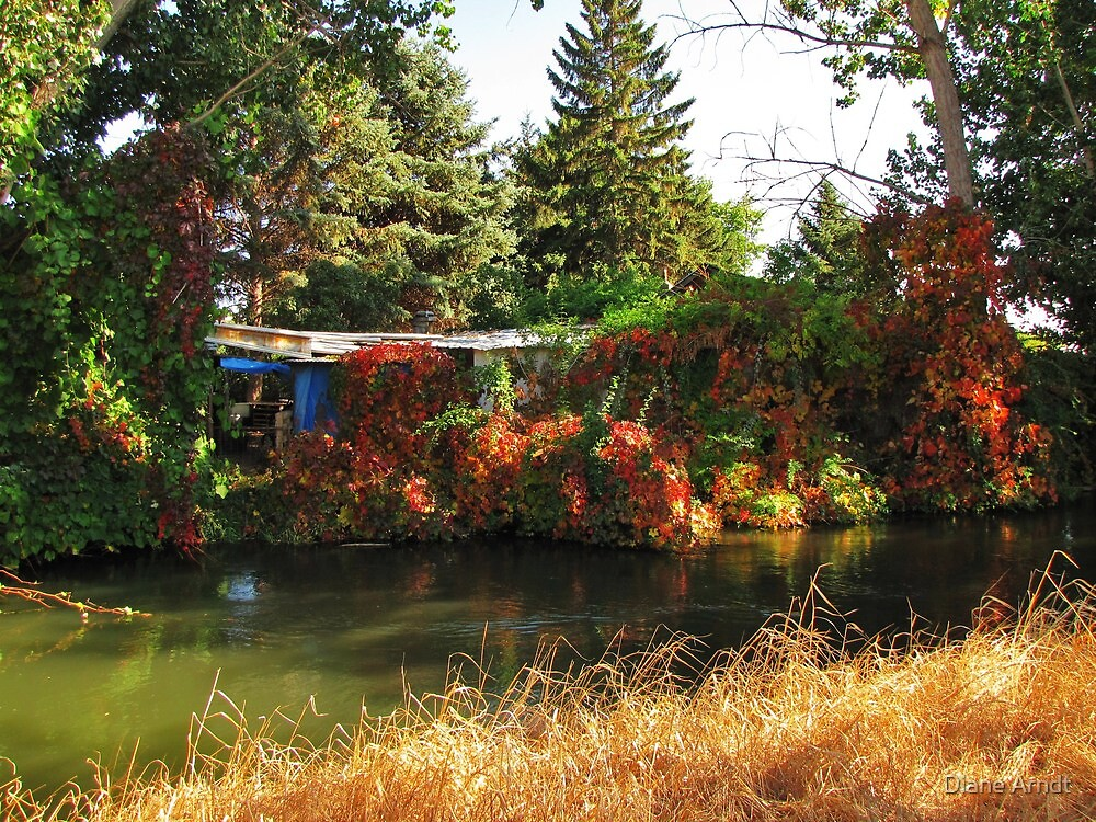 Overgrowth by Diane Arndt