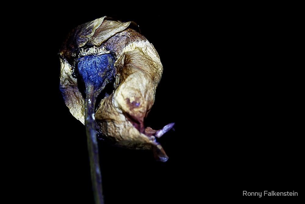 Forgotten Rose - #3 by Ronny Falkenstein