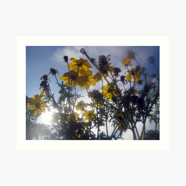 Flowers and Clouds Art Print