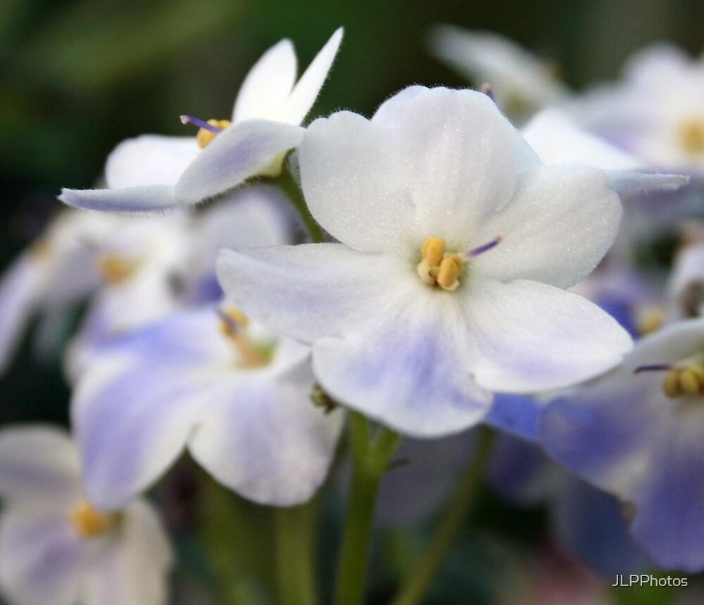 Soothing Petals by JLPPhotos