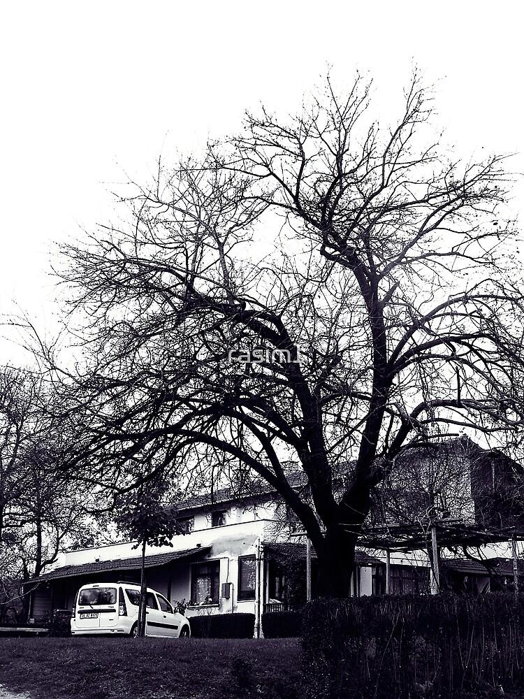 The tree ! by rasim1