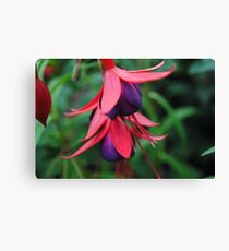 Fuchsia from Summer  Canvas Print