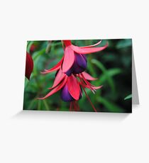 Fuchsia from Summer  Greeting Card