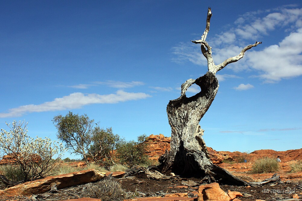 Kings Canyon Outback Australia by davearnold