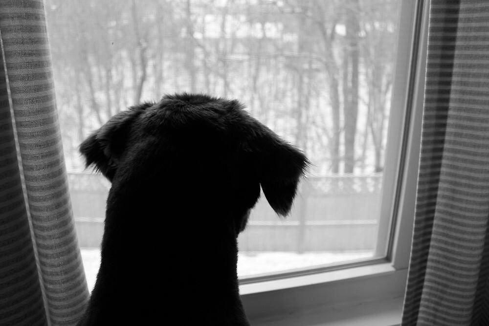 Winter by Mandy Jones