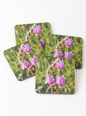 Shooting Stars Coasters