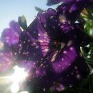 Starry Sky Flowers 6 by Jaeda DeWalt