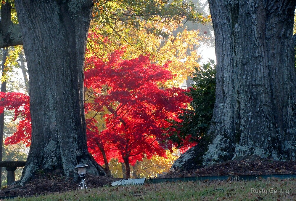CAN YOU SAY RED? by Rusty Gentry