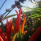 Lavender and Peppers 2 by Jaeda DeWalt