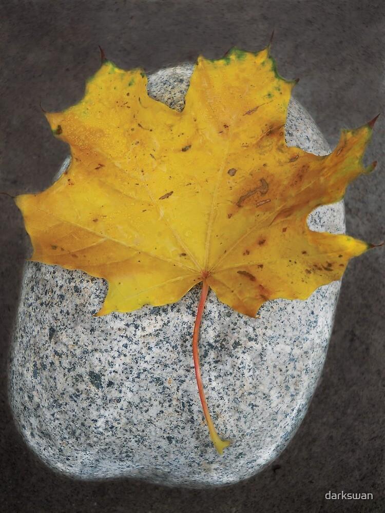 """Oublier,"" Leaf & Rock, Durango, Colorado, 2010 by darkswan"