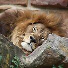 Lazy King by grayjenny