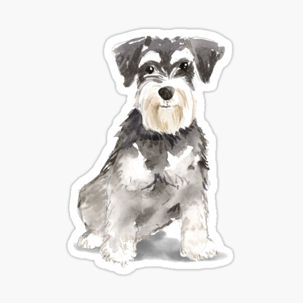 Watercolor Miniature Schnauzer  Sticker
