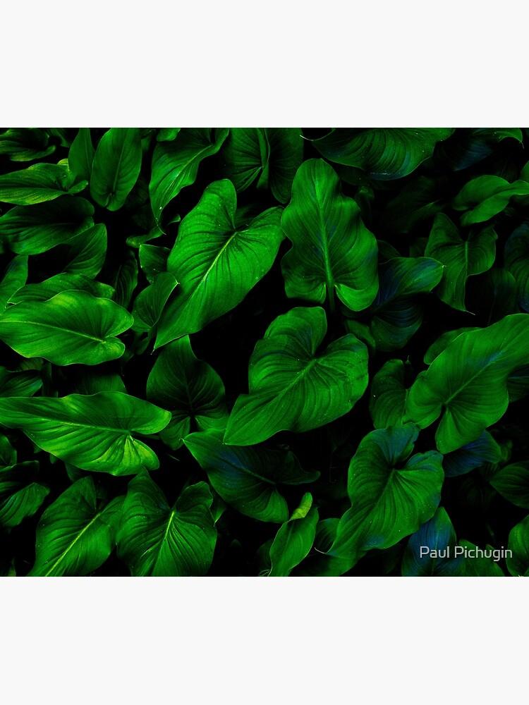 Dark Green Lilly Leaves by paulmp
