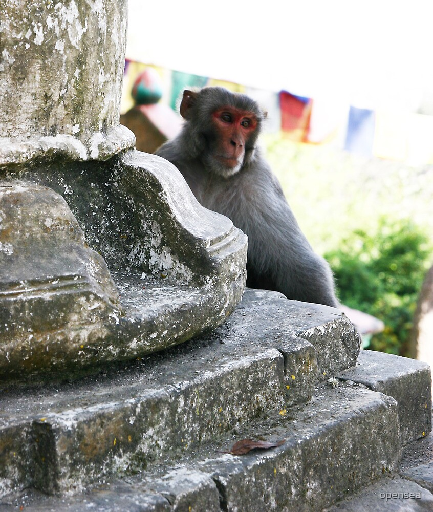 The temple monkey by opensea