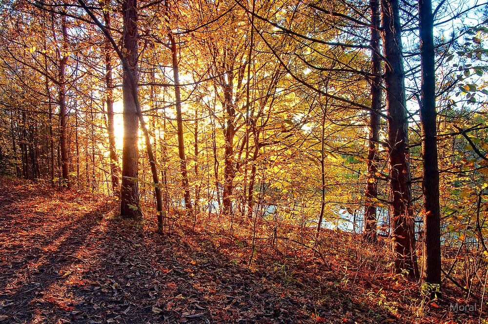 Backlit Trees by Ryan Watts