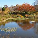 On Holden Pond by Monnie Ryan