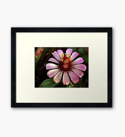 Queen of the Flower Fairy's 2 Framed Print
