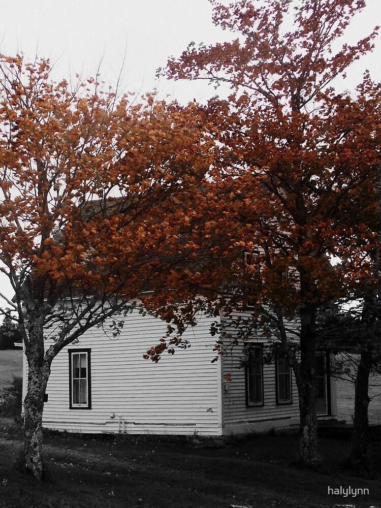 Abandoned house by halylynn