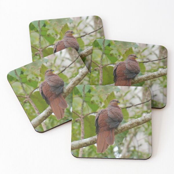 WO ~ SC ~ DOVE ~ Brown Cuckoo-Dove FYMXZU6C by David Irwin 190919 Coasters (Set of 4)