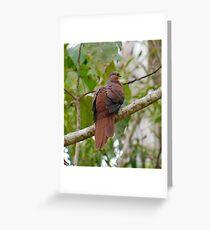 WO ~ SC ~ DOVE ~ Brown Cuckoo-Dove by David Irwin 190919 Greeting Card