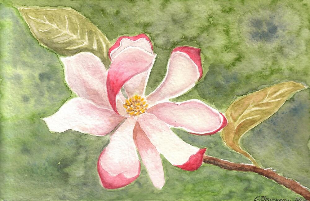 A Single Magnolia by Christa57