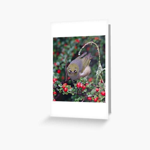 SILVEREYE ~ Grey-backed Silvereye TBkDybq5 by David Irwin 190919 Greeting Card